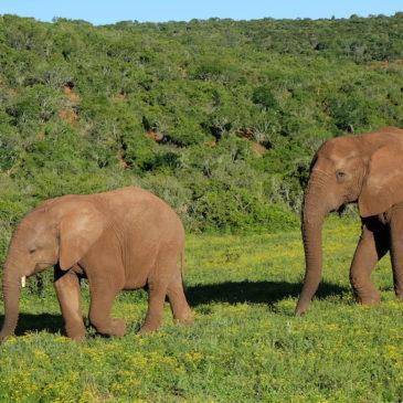 Südafrika, Swaziland und Lesotho : wild und anders (Teil 2)